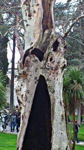 palacio topkapi árbol